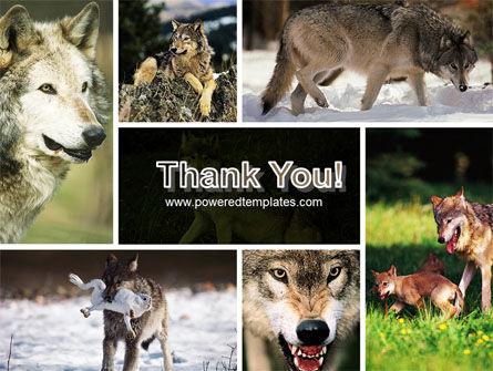 Wolf PowerPoint Template Slide 20