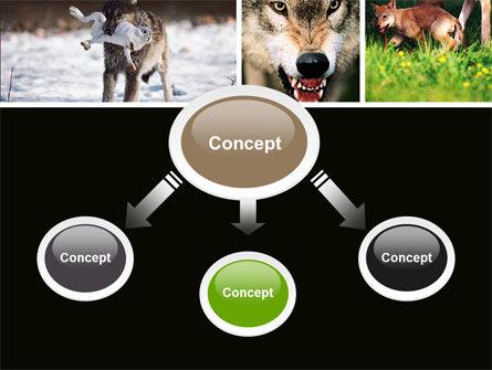 Wolf PowerPoint Template, Slide 4, 05439, Animals and Pets — PoweredTemplate.com