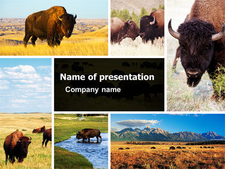 Animals and Pets: Bison PowerPoint Template #05455