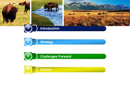 Bison PowerPoint Template, Slide 3, 05455, Animals and Pets — PoweredTemplate.com