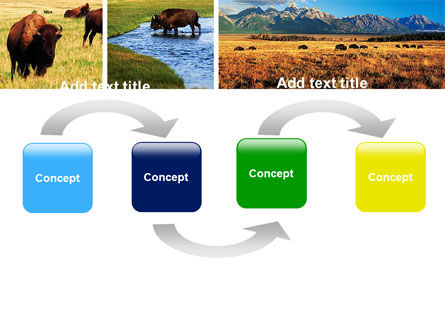 Bison PowerPoint Template, Slide 4, 05455, Animals and Pets — PoweredTemplate.com