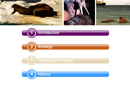 Walrus Free PowerPoint Template, Slide 3, 05511, Animals and Pets — PoweredTemplate.com