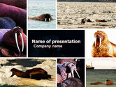 Animals and Pets: Modello PowerPoint Gratis - Tricheco #05511