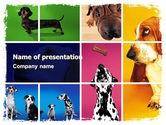 Animals and Pets: Dog Breed PowerPoint Template #05529