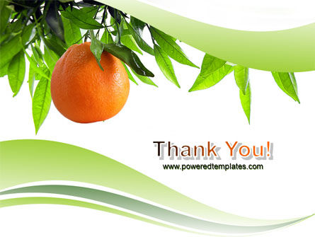 Orange Tree PowerPoint Template Slide 20