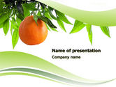 Agriculture: Orange Tree PowerPoint Template #05547
