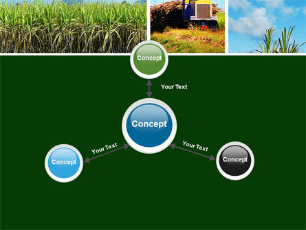 Sugar Cane PowerPoint Template Slide 14