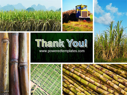 Sugar Cane PowerPoint Template Slide 20