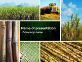 Agriculture: Sugar Cane PowerPoint Template #05770