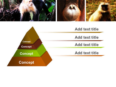 Primates PowerPoint Template, Slide 4, 05820, Animals and Pets — PoweredTemplate.com