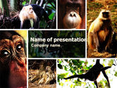 Animals and Pets: Primaten PowerPoint Template #05820