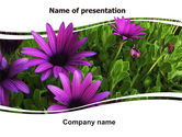 Nature & Environment: Violet Flowers PowerPoint Template #06051