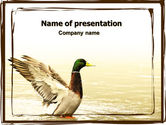 Animals and Pets: Modello PowerPoint - Fiume anatra #06105