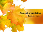 Nature & Environment: Yellow Leaves Of Maple PowerPoint Template #06166