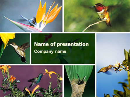 Hummingbird PowerPoint Template, 06176, Animals and Pets — PoweredTemplate.com
