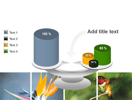 Hummingbird PowerPoint Template Slide 10