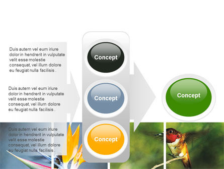 Hummingbird PowerPoint Template Slide 11
