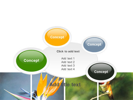 Hummingbird PowerPoint Template Slide 16