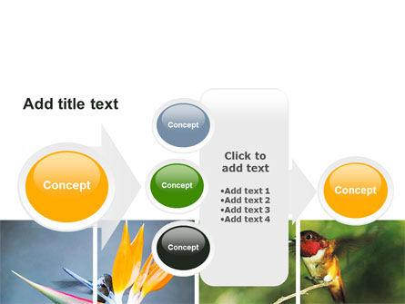 Hummingbird PowerPoint Template Slide 17