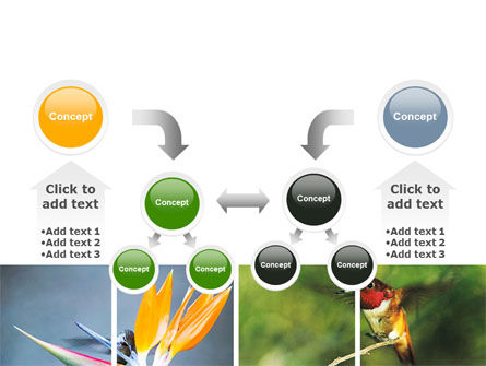 Hummingbird PowerPoint Template Slide 19