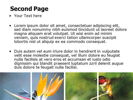 Hummingbird PowerPoint Template, Slide 2, 06176, Animals and Pets — PoweredTemplate.com