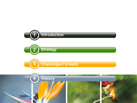 Hummingbird PowerPoint Template, Slide 3, 06176, Animals and Pets — PoweredTemplate.com