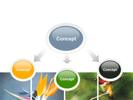 Hummingbird PowerPoint Template, Slide 4, 06176, Animals and Pets — PoweredTemplate.com