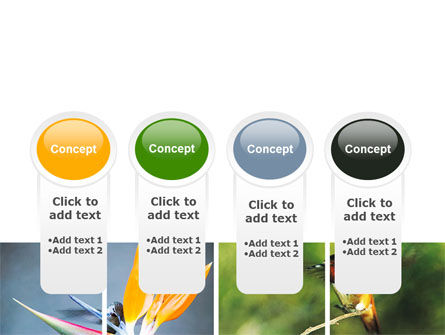 Hummingbird PowerPoint Template Slide 5