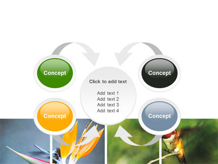 Hummingbird PowerPoint Template Slide 6