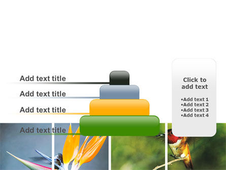 Hummingbird PowerPoint Template Slide 8