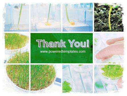 Plant Breeding In Laboratory Free PowerPoint Template Slide 20