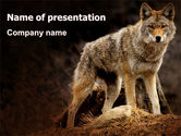 Animals and Pets: Coyote PowerPoint Template #06203