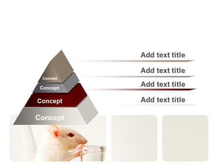 Rodent PowerPoint Template, Slide 4, 06214, Technology and Science — PoweredTemplate.com