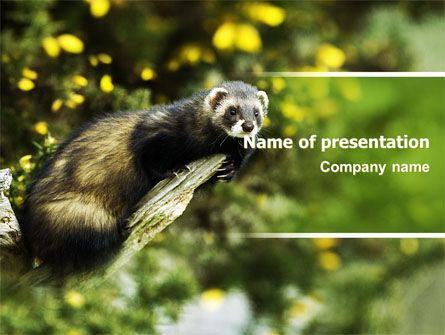 Polecat Free PowerPoint Template, 06239, Animals and Pets — PoweredTemplate.com