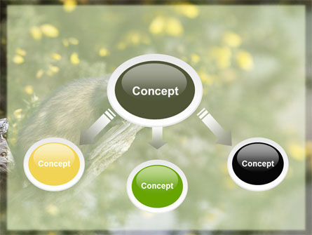 Polecat Free PowerPoint Template, Slide 4, 06239, Animals and Pets — PoweredTemplate.com