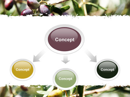 Olive PowerPoint Template, Slide 4, 06286, Agriculture — PoweredTemplate.com