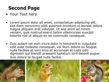 Squirrel PowerPoint Template, Slide 2, 06311, Animals and Pets — PoweredTemplate.com
