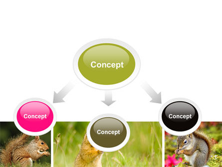 Squirrel PowerPoint Template, Slide 4, 06311, Animals and Pets — PoweredTemplate.com