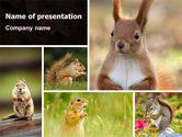 Animals and Pets: Squirrel PowerPoint Template #06311