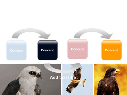 Bird Of Prey PowerPoint Template, Slide 4, 06331, Animals and Pets — PoweredTemplate.com