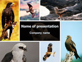 Animals and Pets: Bird Of Prey PowerPoint Template #06331