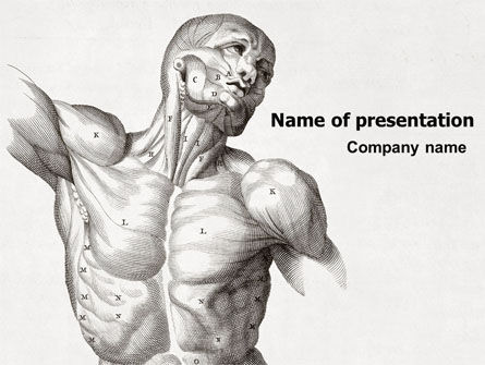 Body Muscles PowerPoint Template, 06387, Medical — PoweredTemplate.com