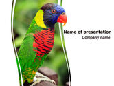Animals and Pets: Australian Parrot PowerPoint Template #06431