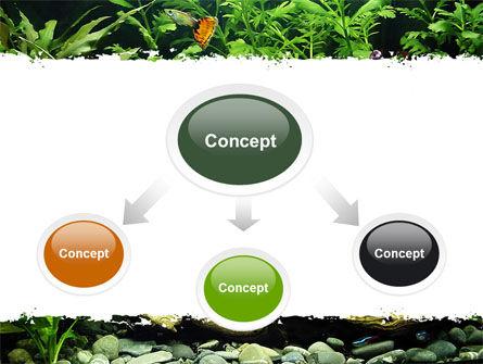 Aquarium Fish Species PowerPoint Template, Slide 4, 06452, Nature & Environment — PoweredTemplate.com