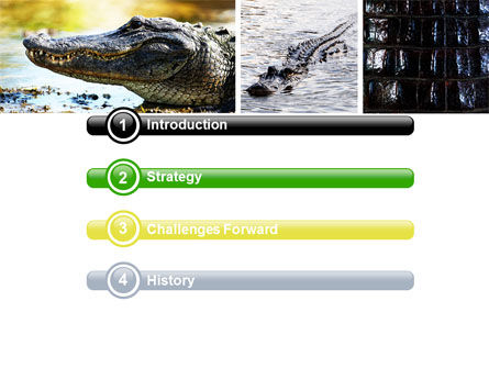 Cayman PowerPoint Template, Slide 3, 06484, Animals and Pets — PoweredTemplate.com