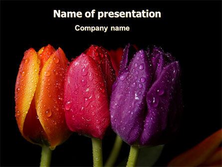 Holiday/Special Occasion: Colorful Tulips PowerPoint Template #06496