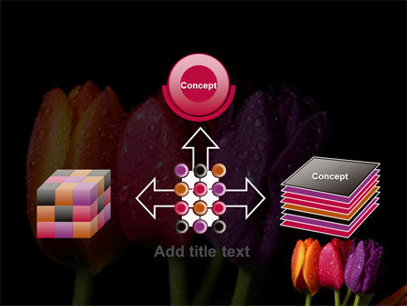 Colorful Tulips PowerPoint Template Slide 19