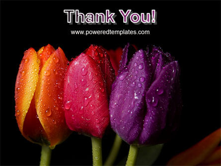 Colorful Tulips PowerPoint Template Slide 20