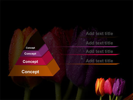 Colorful Tulips PowerPoint Template, Slide 4, 06496, Holiday/Special Occasion — PoweredTemplate.com