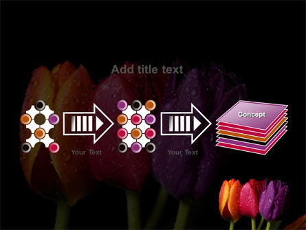 Colorful Tulips PowerPoint Template Slide 9
